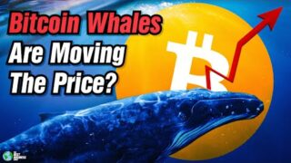 Bitcoin Whales Are Currently Moving The Price.